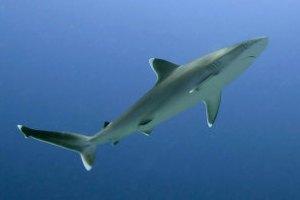 Біля єгипетського курорту Хургада з'явилися акули