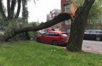 Через падіння дерев на Київщині загинуло двоє осіб