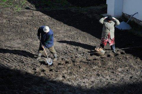 Мэр Ивано-Франковска: огород - не общественное место, сажать картошку можно