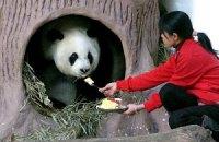 Пятничная панда #116