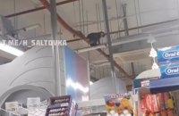 В супермаркете Харькова ловили сбежавшую из зоопарка обезьяну