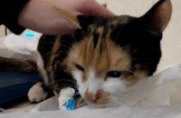 """В Днепре ветеринары спасли кошку, которую случайно """"постирали"""" в стиральной машине"""