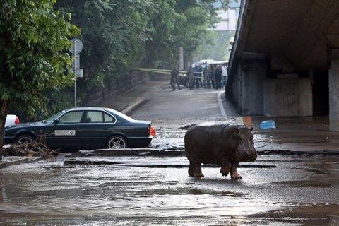 Зоопарк Тбілісі, який постраждав від повені, отримає більш ніж 100 тварин