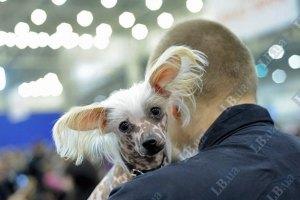 В Луцке будут штрафовать владельцев незарегистрированных собак
