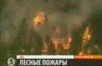 В США бушуют лесные пожары
