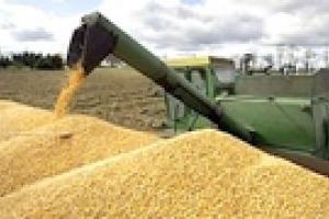 Украина в этом году экспортирует около 17 млн. тонн зерна