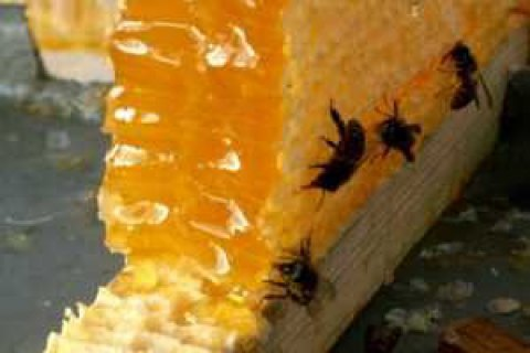 Ukraine used up annual quota for honey, juices exports to EU