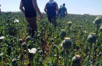 Enormous narcotic poppy field found in Poltava Region