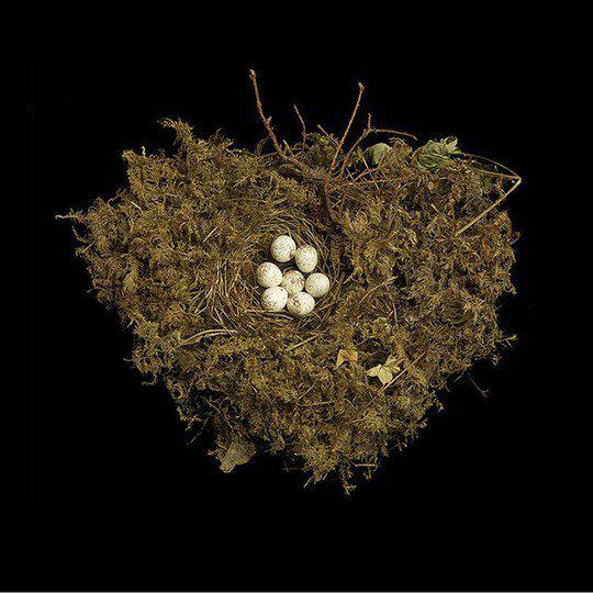 Гнездо славки Теннеси