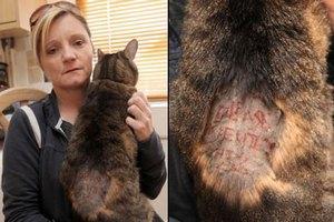 Британка получила записку на коте