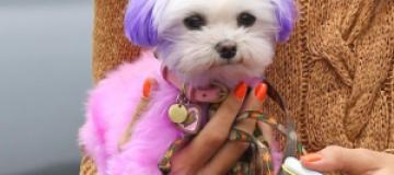 Алессандра Амбросио выгуляла розовую собачку