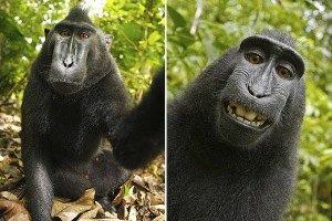 Улыбчивая обезьяна устроила себе фотосессию