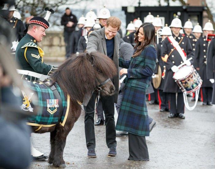 Пони своеобразно поприветствовал принца Гарри