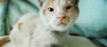 Приплывший в Калифорнию китайский кот обрел хозяев