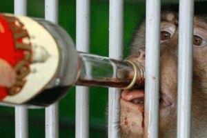 Обезьян в зоопарке Караганды решили согреть вином