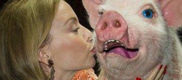 Кайли Миноуг при всех зацеловала свинью