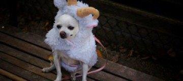 Костюмированный парад собак в Нью-Йорке