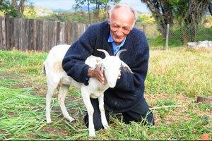 74-летний житель Бразилии решил жениться на козе