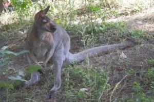 Туристы поймали в одесском парке кенгуру