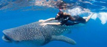 Австралийца оштрафовали за катание на ките