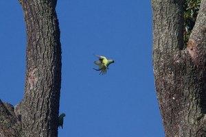 Новозеландский попугай ограбил туриста