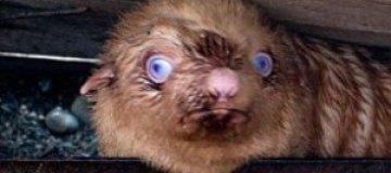 В России появился тюлененок-изгой