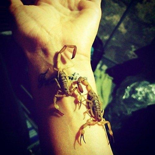 Водонаева в восторге от ядовитых скорпионов