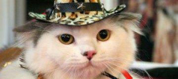 Итальянцы законодательно утвердили права котов на личную жизнь