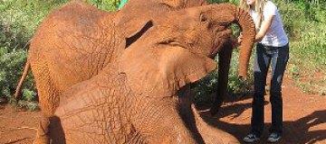 Жизель Бюндхен подружилась со слоненком