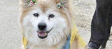 В Японии умерла самая старая собака мира