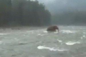 В Интернете появилось видео с мамонтом, переходящим реку на Чукотке