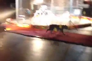 Посетительница цирка встретилась в туалете с тигром