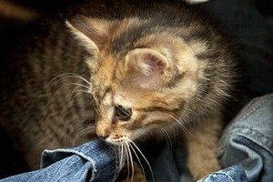 В Шотландии котенка постирали в машинке