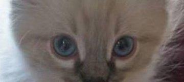 Екатеринбургский кот Бублик подался в политику