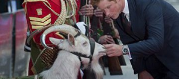 Принц Гарри показал язык и станцевал с козой