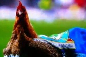 """Фанаты """"Блэкберна"""" выпустили на футбольное поле курицу протеста"""