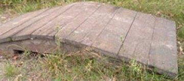 В Белоруссии построили переходы для муравьев