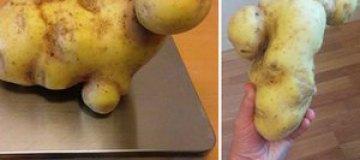 """В Швеции нашли картошку """"Кейт Уинслет"""""""