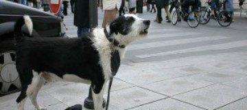 В США собакам запретили лаять дольше десяти минут