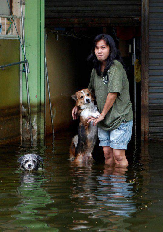 Пострадавшая от наводнения девушка со своими собаками в Таиланде