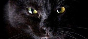 Римский бродячий кот стал самым богатым в мире