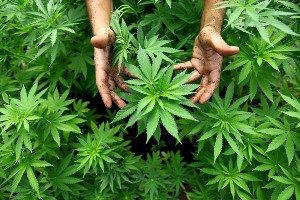 """Американец выкрал из полицейского участка """"вкусно пахнущую"""" марихуану"""
