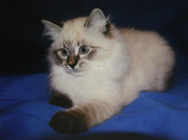 "Медведев: ""Будущая кошка г-жи Халонен"""