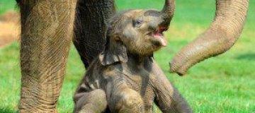 15 милых детенышей зверей