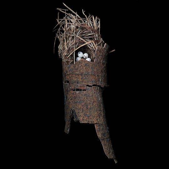Гнездо славки Макгилливрея
