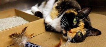 Кошка-путешественница за пять лет добралась из Колорадо в Нью-Йорк