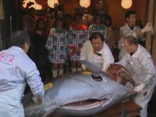 Цена за один килограмм тунца составила $2700