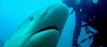 Дайвер поздоровался с акулой