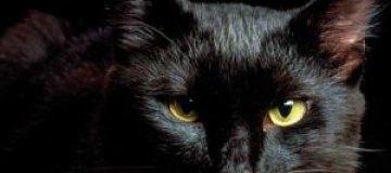 В России наркотики заключенным проносила черная кошка