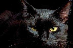 В России кот вызвал в ломбард группу быстрого реагирования